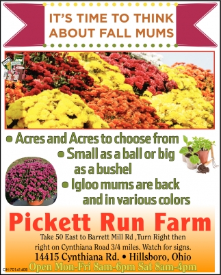 It's time to think about fall mums